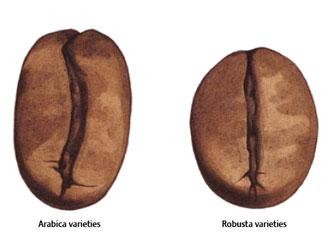 Arabica e Robusta